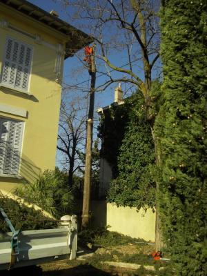 démontage d'un Cyprès entre une maison et des lignes éléctriques
