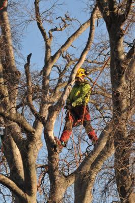 un grand pas pour l'arbre